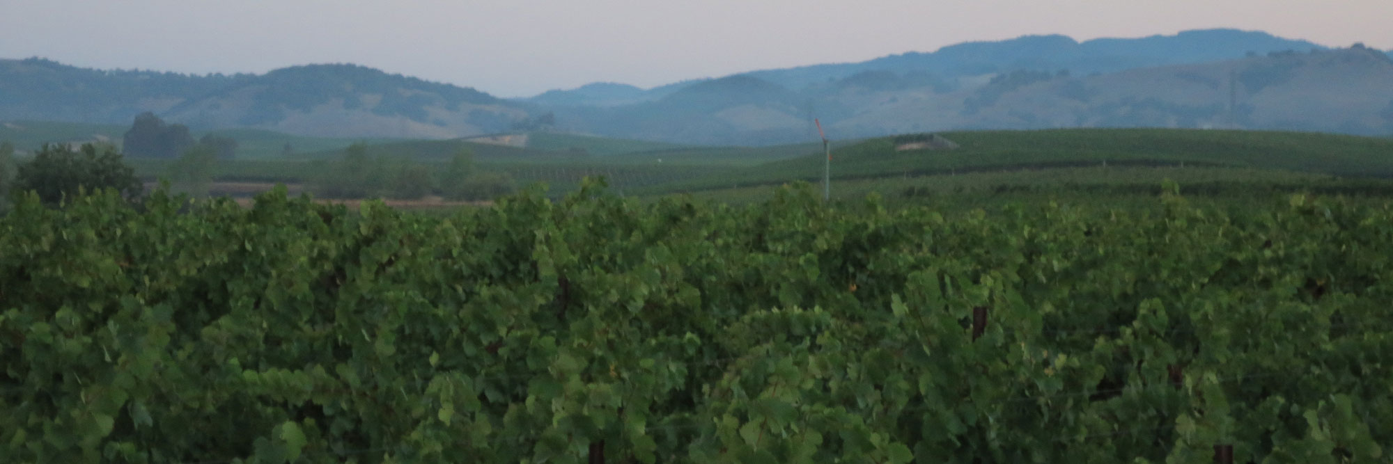 Dearden Wines Vineyards